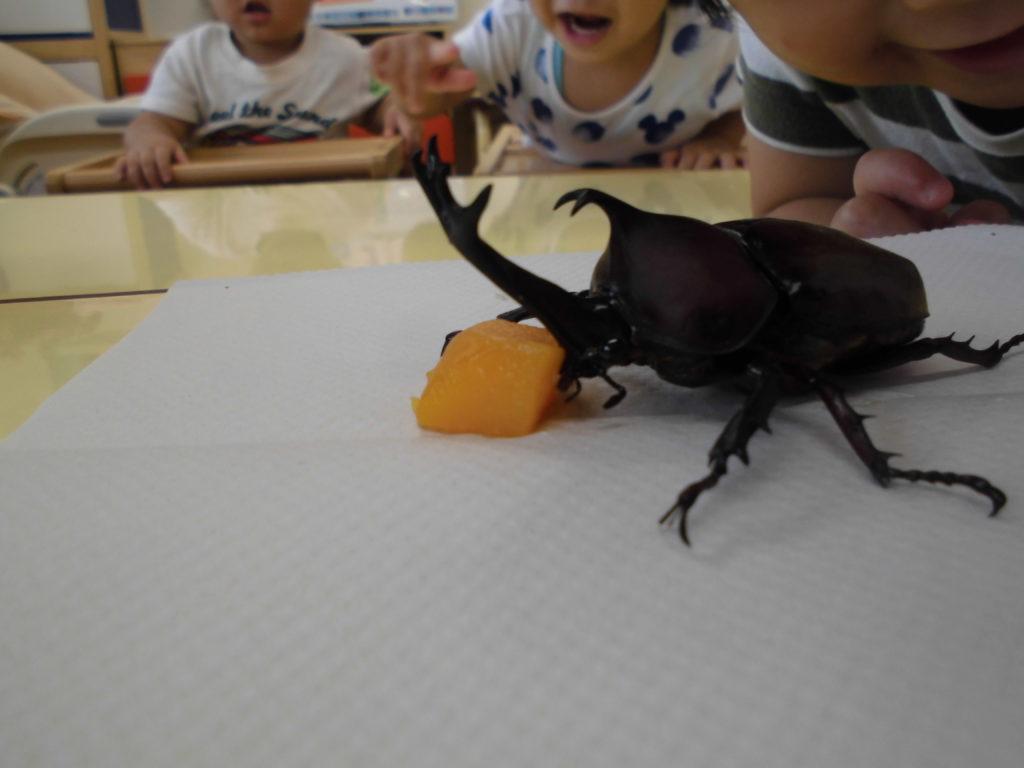 カブトムシ かがやき保育園 福岡市西区